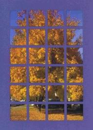 Autumn tree window