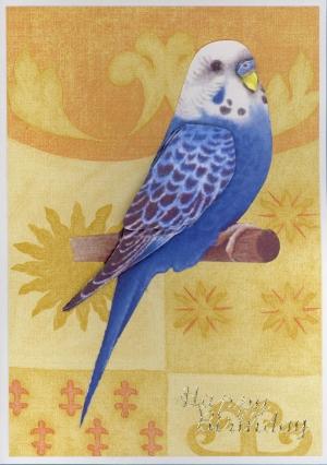 bird card david